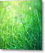 Spring Green Grass Metal Print