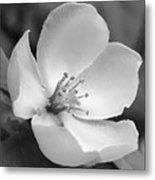 Spring - Id 16235-142734-6855 Metal Print