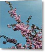 Spring In Bloom Metal Print