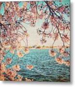 Spring In Dc Metal Print