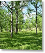Ginkgo Grove In The Spring  Metal Print