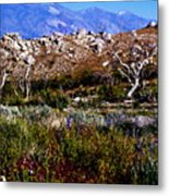 Spring In Onion Valley Metal Print