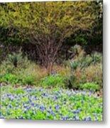 Spring In Texas Metal Print