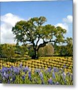 Spring In The Vineyard Metal Print