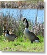 Spring In The Wetlands Metal Print