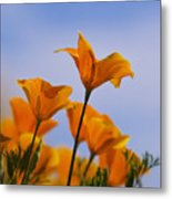 Spring Is A Poppin' Metal Print