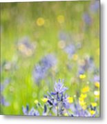 Spring Meadow 3 Metal Print