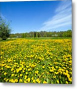 Spring Meadow Full Of Dandelions Flowers And Green Grass Metal Print
