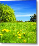 Spring Meadow With Green Grass Metal Print