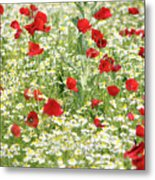 Spring Meadow With Poppy And Chamomile Flowers Metal Print