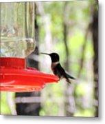 Spring Migration Hummingbird Metal Print