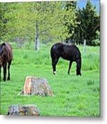 Spring Pastures Metal Print