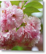 Spring Pink, Green And White Metal Print