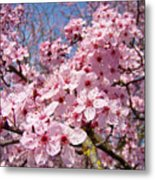 Spring Pink Tree Blossoms Art Print Baslee Troutman Metal Print