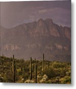 Spring Rain In The Sonoran  Metal Print