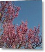 Spring Redbud Tree Metal Print