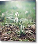 Spring Rising Metal Print by Heather Applegate