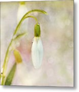 Spring Snowdrops And Bokeh Metal Print