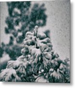 Spring Snowstorm On The Treetops Metal Print