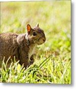 Spring Squirrel Metal Print