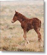 Spring Storm Foal Metal Print