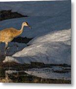 Spring Sunset With Sandhill Crane Metal Print