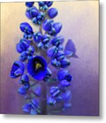 Spring Sunshine On Blue Metal Print