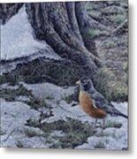 Spring Thaw - American Robin Metal Print
