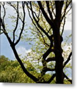 Spring Trees And Clouds Metal Print