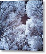 Spring Trees And Shadows Metal Print