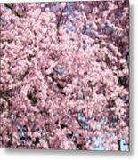 Spring Trees Art Prints Pink Springtime Blossoms Baslee Troutman Metal Print