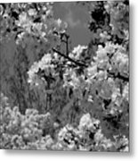 Spring Trees - B And W Metal Print