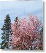 Spring Trees Bossoming Landscape Art Prints Pink Blossoms Clouds Sky  Metal Print