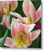 Spring Tulips 151 Metal Print