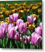Spring Tulips 2 Metal Print