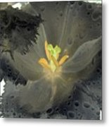 Spring Tulips - Photopower 3106 Metal Print