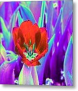 Spring Tulips - Photopower 3146 Metal Print