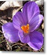 Spring Violet Metal Print