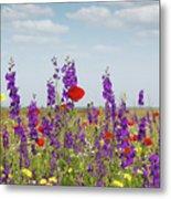 Spring Wild Flowers Meadow Metal Print