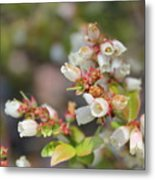 Spring Wildflower Metal Print