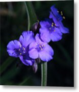 Spring Wildflowers At Hot Springs National Park Metal Print