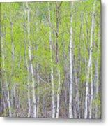 Spring Woods Metal Print
