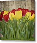 Spring Yellow And Red Tulips Metal Print