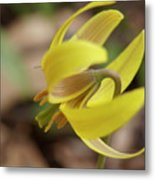Spring Yellow Flower Metal Print