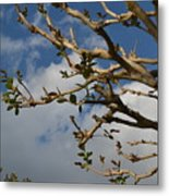 Springing Forth Metal Print