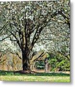 Spring's Canopy Metal Print