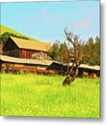 Springtime Barn San Francisco Bay Metal Print by Gus McCrea