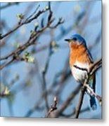 Springtime Blue Metal Print