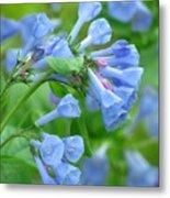 Springtime Bluebells  Metal Print