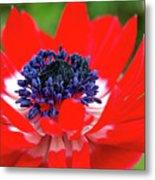 Springtime - Flowers Metal Print